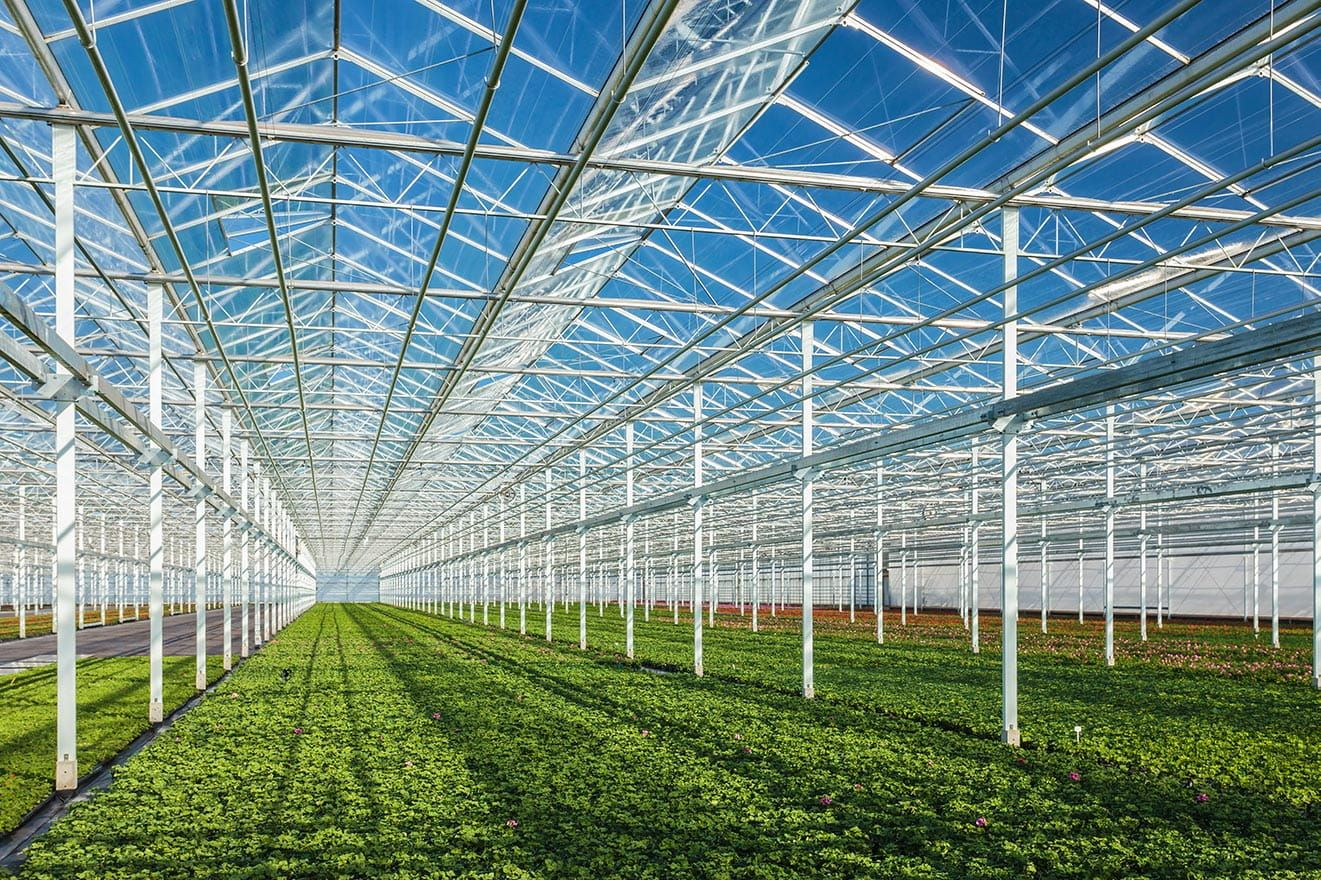 Green shoots amid rising cannabis valuations